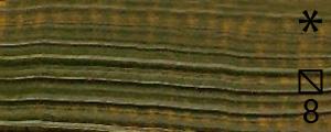 Olejová barva Renesans 20ml – 71 Zeleň listová
