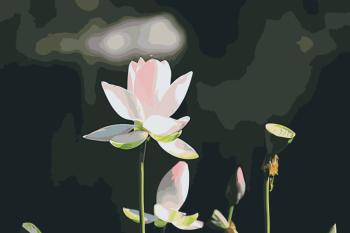 Malování podle čísel – Lotosový květ 40x60cm