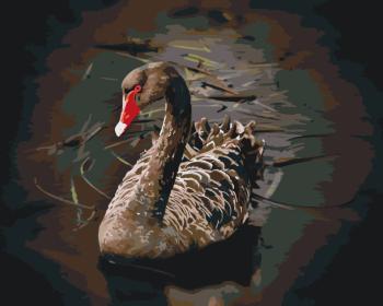 Malování podle čísel – černá labuť 40x50cm