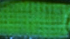Akrylová barva Phoenix 75ml – 568 Zeleň listová